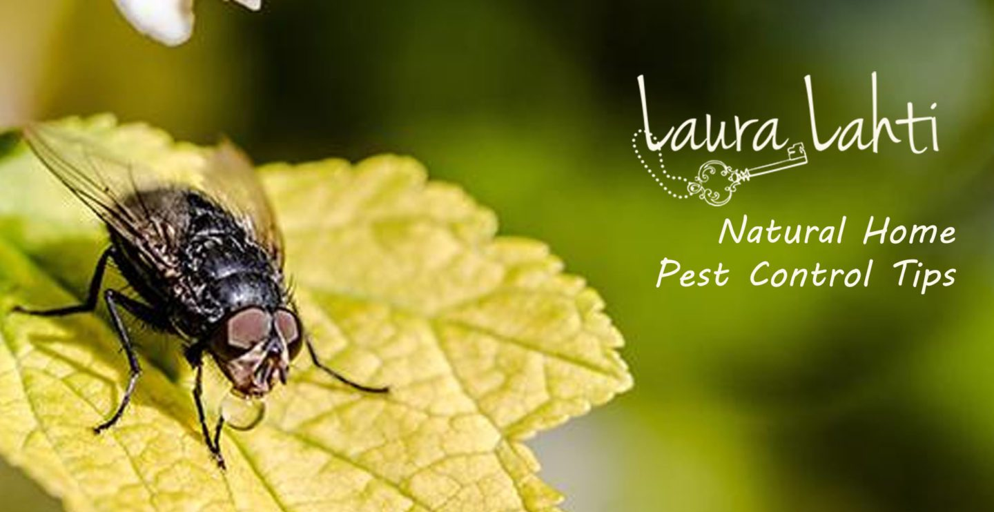 Laura-Lahti-Natural-Home-Pest-Control-Tips